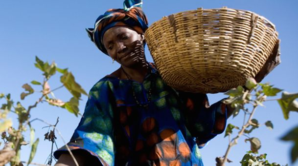 A Fair Trade Cotton Farmer | Source: Fair Trade