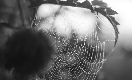 spiderweb_janispalulis_sstock